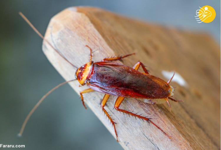 انواع حشرات خانگی و بهترین راه های دفع حشرات